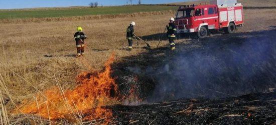 KRONIKA STRAŻACKA: Ponad 20 pożarów traw i zabezpieczenie prac saperskich