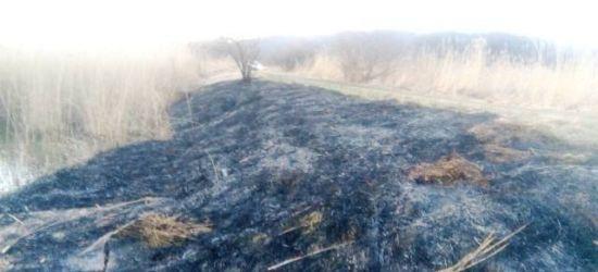 """Groźny pożar trawy przy stawie na """"Sosenkach"""" (ZDJĘCIA)"""