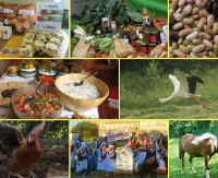 """NA ŻYWO / WALKA O ZDROWIE: Prawdziwa żywność od prawdziwych rolników! Podpisz """"Deklarację Belwederską"""" (TRANSMISJA LIVE)"""