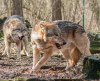 Myśliwi skazani. W Polsce nie ma zgody na zabijanie zwierząt będących pod ochroną