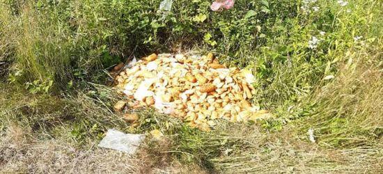 Kilkanaście kilogramów sera wyrzucone w lesie (FOTO)