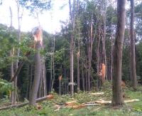 ZARSZYN24.PL: Niszczycielska siła trąby powietrznej. Zniszczone 4 ha lasu (ZDJĘCIA)