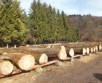 BIESZCZADY: Transporty drewna z dróg na kolej?