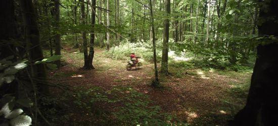 Lasy to nie tory wyścigowe! Niektórzy o tym zapominają