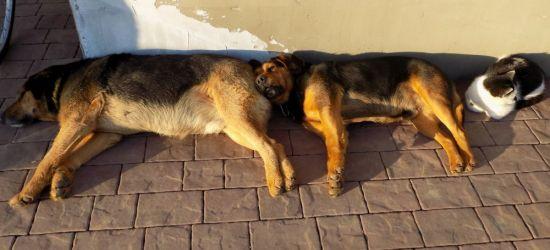 SANOK: Piękna pogoda, czas na odpoczynek. Ze słońca korzystają również psy i koty (FOTO)