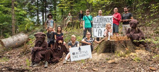 NADESŁANE: Inicjatywa Dzikie Karpaty przeciw wycince starodrzewu w Bieszczadach