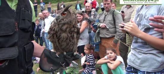 """ZAGÓRZ: Drapieżne ptaki, psy myśliwskie, wyborne dania """"lasu"""" i muzyczne atrakcje podczas XVII Rykowiska Galicyjskiego (FILM, ZDJĘCIA)"""