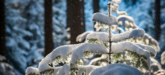 SANOK. Powrót zimy? W nocy może spaść nawet 20 cm śniegu!