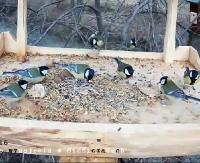 BIESZCZADY: Karmnik dla ptaków na żywo prosto z bieszczadzkiej polany! (LIVE)