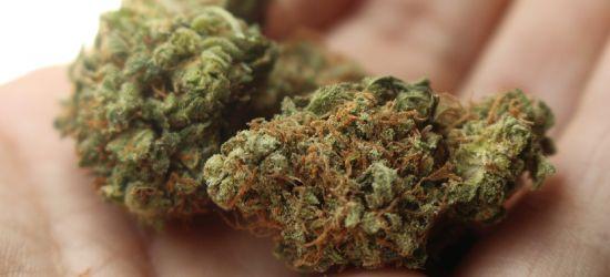 PODKARPACIE. Marihuana i mefedron w saszetce 18-latka