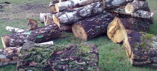 REGION: W Wielkim Tygodniu ukradli 11 metrów przestrzennych drewna (ZDJĘCIA)