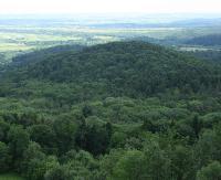 """""""Puszcza Karpacka"""" ma się dobrze. Leśnicy o prawdach i mitach wokół Turnickiego Parku Narodowego"""