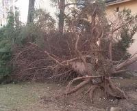 UWAGA: Wieje silny wiatr. Zerwane dachy, powalone drzewa na liniach energetycznych i jezdni (ZDJĘCIA, FILM)