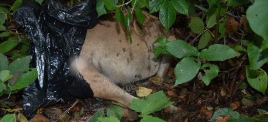 PODKARPACIE: Zabił psa, bo był nieposłuszny (ZDJĘCIE)