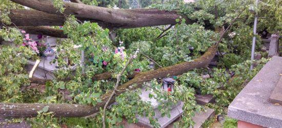 SANOK: Silny wiatr. Drzewo spadło na nagrobki (ZDJĘCIA)