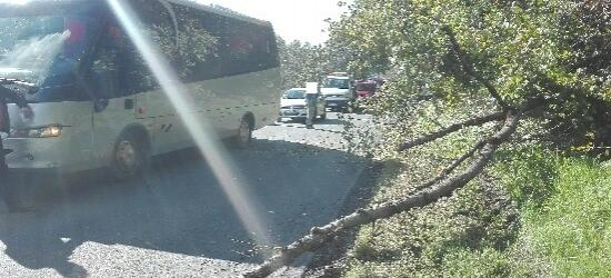 Na autokar spadł konar drzewa. Ranny pasażer (ZDJĘCIE)