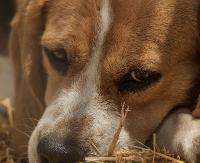 Postrzelił psa z wiatrówki. Za znęcanie się nad zwierzęciem grozi mu nawet do 2 lat więzienia