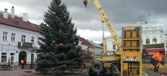 SANOK: Choinka już stoi. Zabłyśnie 6 grudnia (ZDJĘCIA)