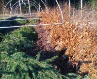 Co minutę w lasach sadzi się 1000 nowych drzew. W naszym regionie to głównie jodły i buki (ZDJĘCIA)