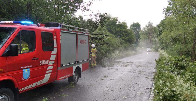 Nawałnica nad Sanokiem i regionem. Powalone drzewa, gałęzie na drogach (FOTO)