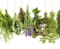 NASZ PATRONAT: Co wiemy o ziołach? Przewodnicy PTTK zapraszają na wykład o zielarstwie