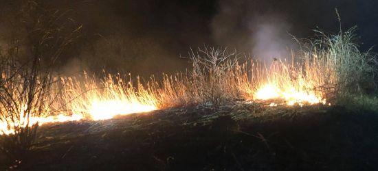 Nocny pożar traw. W akcji strażacy z OSP Odrzechowa (ZDJĘCIA)