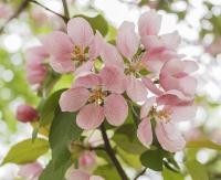 Wiosna nad Sanem w Trepczy