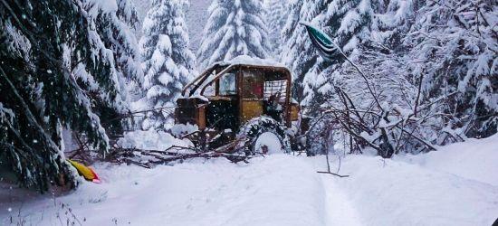 Wilczyce oskarżają leśników o próbę zniszczenia obozowiska. Rzecznik RDLP zaprzecza