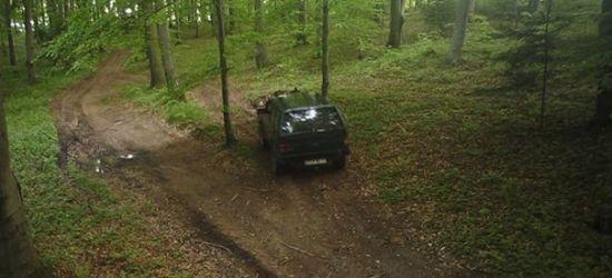 Kierowcy na potęgę łamią leśne przepisy