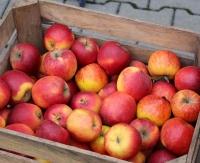 ZAGÓRZ: Będą rozdawać jabłka i marchewkę