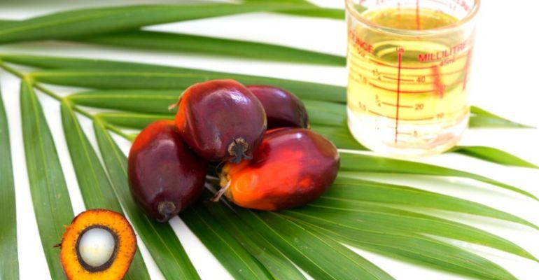 Olej palmowy certyfikowany i niecertyfikowany. Na czym polega różnica