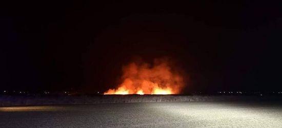 Pożar 10 hektarów nieużytków! Ogień gasili strażacy z dwóch powiatów (ZDJĘCIA)