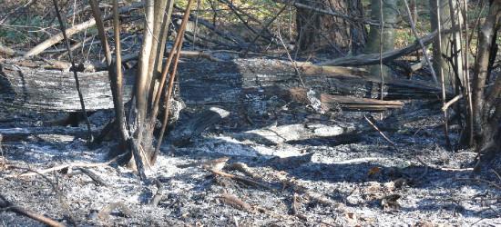 Pożar baligrodzkiego lasu w Bieszczadach (FOTO)