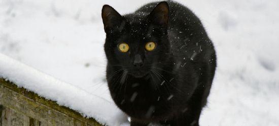 INTERWENCJA: Idzie trudny czas dla bezdomnych kotów. Potrzebna pomoc!