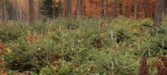 Malowanie lasu trwa