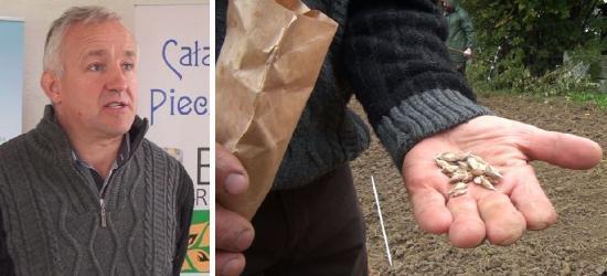 Zdrowa żywność sprzed wojny? W Niebieszczanach chcą odtworzyć stare zboża (FILM)