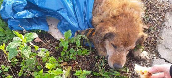 UDOSTĘPNIJ! Nałożył psu krawat, zapakował w worek i zostawił przy drodze (FOTO)