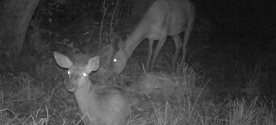 BIESZCZADY: W ciemnym, dzikim sadzie (VIDEO)