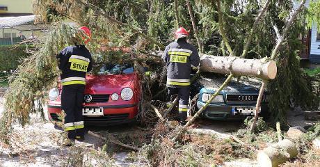 SANOK: Kilkudziesięciometrowy świerk spadł na samochody. Zerwana linia energetyczna. Zobacz wideo z akcji strażaków (FILM, ZDJĘCIA)