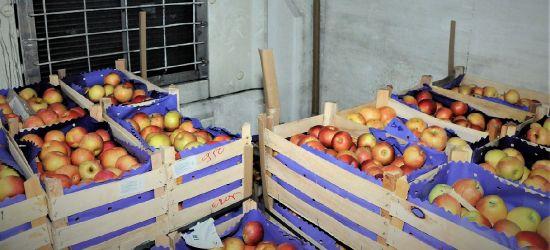 Nielegalnie przez granicę w transporcie jabłek (ZDJĘCIA)