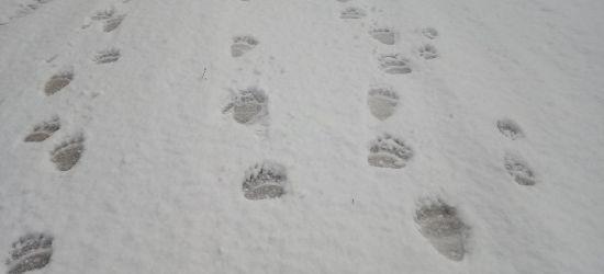 Poranny spacer bieszczadzką drogą (FOTO)