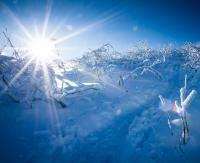 BIESZCZADY: Mała Rawka w zimowej krasie. Kolejna porcja zimowych krajobrazów (ZDJĘCIA)