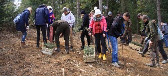 """BIESZCZADY: Studenci sadzili las. """"1000 drzew na minutę"""" (FOTO)"""