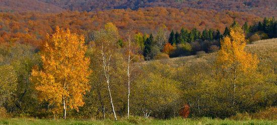 Bieszczadzka złota jesień schodzi w doliny (FOTO)
