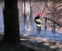 GMINA ZAGÓRZ: Pożar lasu w miejscowości Łukowe (VIDEO)