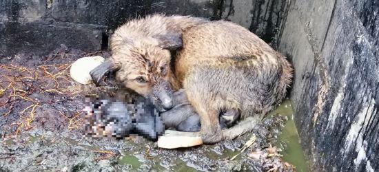 Szok! Suczka z martwymi szczeniakami znaleziona w kompostowniku (UWAGA DRASTYCZNE ZDJĘCIA)