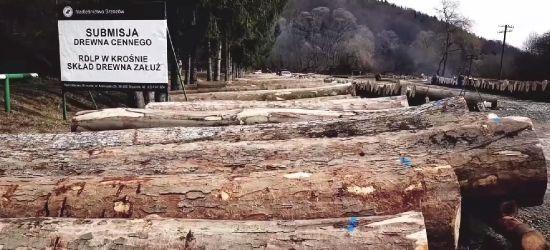 Nasze drewno cenią w całej Europie! (VIDEO)