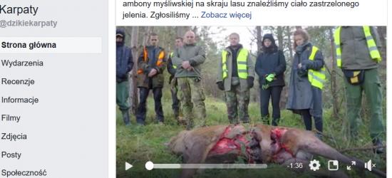 BIESZCZADY: Martwy jeleń. Zabił myśliwy czy inny jeleń?