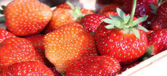 Truskawki prosto z pola! Codziennie świeże owoce (ZDJĘCIA)